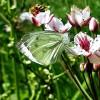 Nie trzeba anielskich skrzydeł, by oderwać się od ziemi, wystarczą motyle...  ::