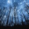 niebo..gwiazdy..las..  ::