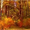 piękna jesień...