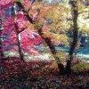 ...lecą liscie lecą...  :: Była to złota, dojrzałością pachnąca jesień. Najpiękniejsza z pór roku,  zadumana pogodną