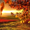 piękne..jesiennie...  ::