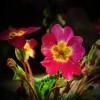 kwiaty..  :: Kwiaty.... Dw&amp;oacute;<br />ch uczni&amp;oacute;w spierało się jakie kwiaty są najpiękniejsze. -Najpięk
