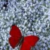 ..i tak z kwiatka na kwiatek....jak to motylek  ::