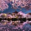 w japońskim ogrodzie...  :: życzę wszystkim wszystkiego dobrego....