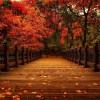 prawie jesień...  ::