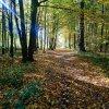 spacer i zaduma w listopadowy dzień  ::        posłuchać ,przypomnieć,i cieszyc sie że jest ok ,że sie pamięta