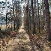 każda chwila dobra na spacer  ::